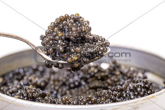 Black caviar in spoon from metal can, high angle