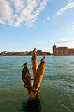 Venice Italy lagune view with bricole