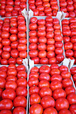 Organic tomatoes on display at bazaar