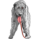 vector dog Irish Wolfhound breed