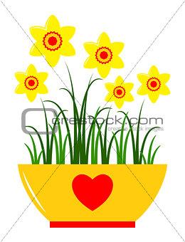 daffodils in pot