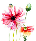 Colorful summer illustration of Poppy flowers