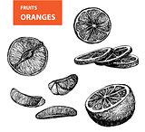 Oranges - set of vector illustration
