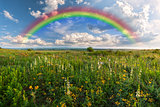 Rainbow over meadow
