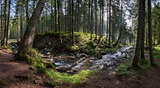 Panorama of a large forest with river