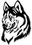siberian husky head black white