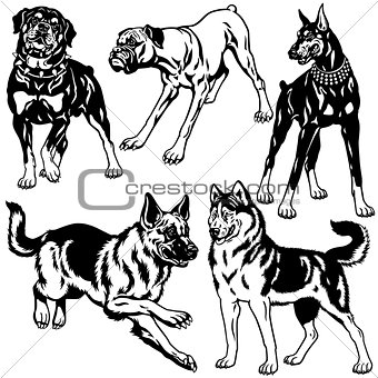 black white set with dog breeds