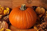 Harvest pumpkin