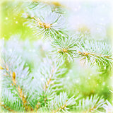 Pine tree branch background