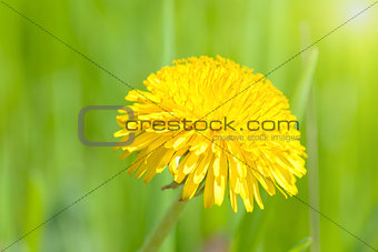 Beautiful spring flower background