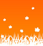 Autumn background with flying maples and grass