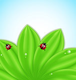 Green leaves ecology fresh background