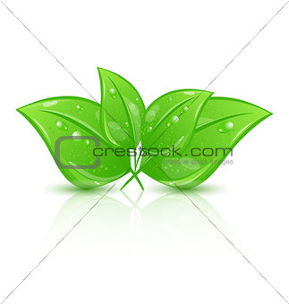 Green eco leaves isolated on white background