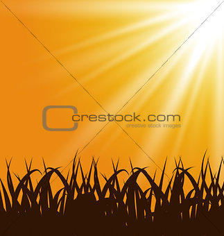 Autumn background with grass and sunlight
