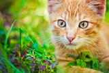Young Kitten Is Hunting On Green Grass