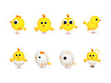 Cute group of yellow chikens