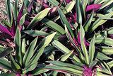 Beautiful Green and Purple Plant