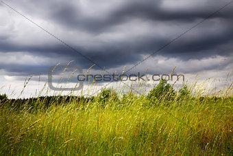 Green spring field
