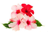 bunch of hibiscus flowers