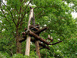 old wooden power line