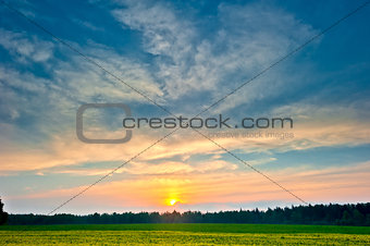 beautiful sunrise with a bright sky over the summer forest