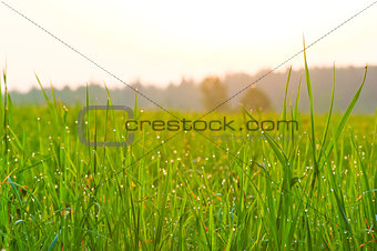 Close-up of fresh grass on meadow