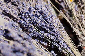 fresh aromatic lavender in basket macro outdoor