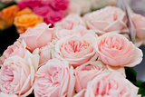 colorful beautiful roses flowers macro closeup card background
