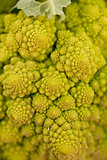 fresh green romanesco broccoli cabbage macro closeup