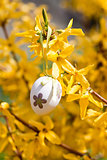 easter egg and forsythia tree in spring outdoor