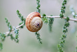 brown snail sitting on geen tree macro closeup