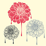 Hand-drawn flowers of dahlia