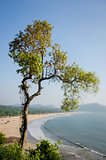 A tree overlooking one of Goa's beautiful and yet not much explored sand beachesnal wooden boat