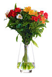 Beautiful Coloured Flowers in the Glass Vase Isolated on White