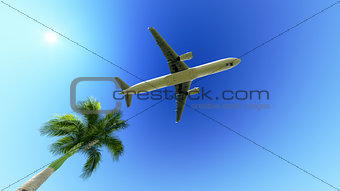Airplane over the palm tree