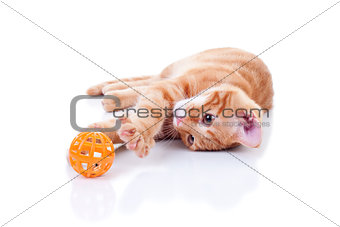 Cat Playing On White