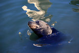 gray seals water