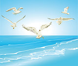 Gulls on the sea