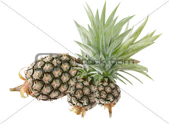 three of pineapple