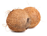 Two brown ripe coconut
