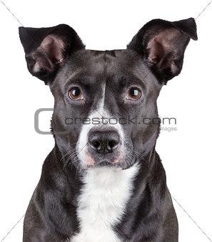 Portrait of black cute dog