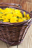 Dandelions in a basket