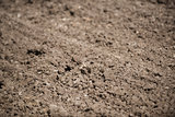 tilled soil