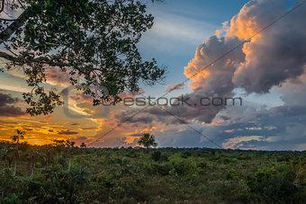 Amazon savannah in the peruvian Amazon jungle at Madre de Dios P
