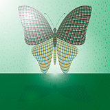 butterfly on the wall and its reflection on a horizontal surface