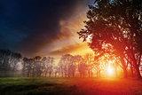Dawn in a park
