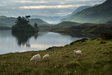 Sheep in field at sunrise landscape with mountains and lake in b