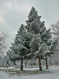 first snow in the park