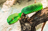 Green Snake creeps on tree