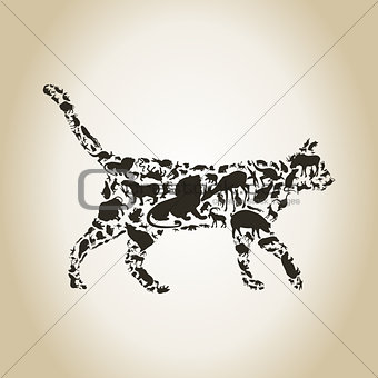 Cat an animal